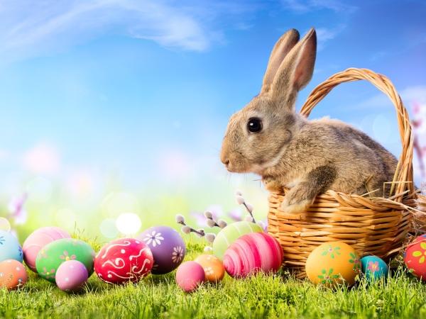 Showroom Easter Opening Hours